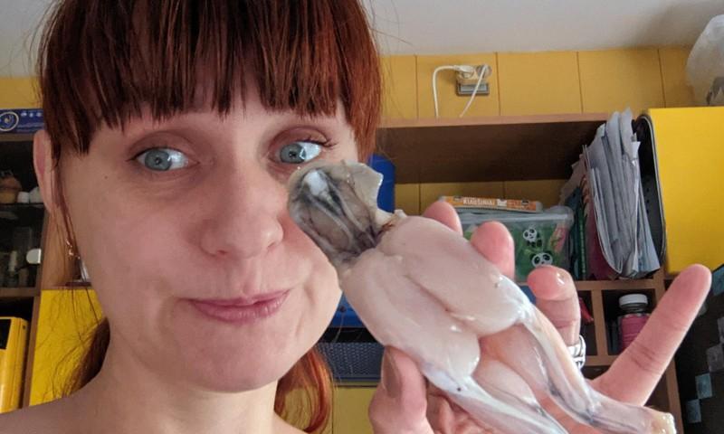 Pažintis su varlėmis