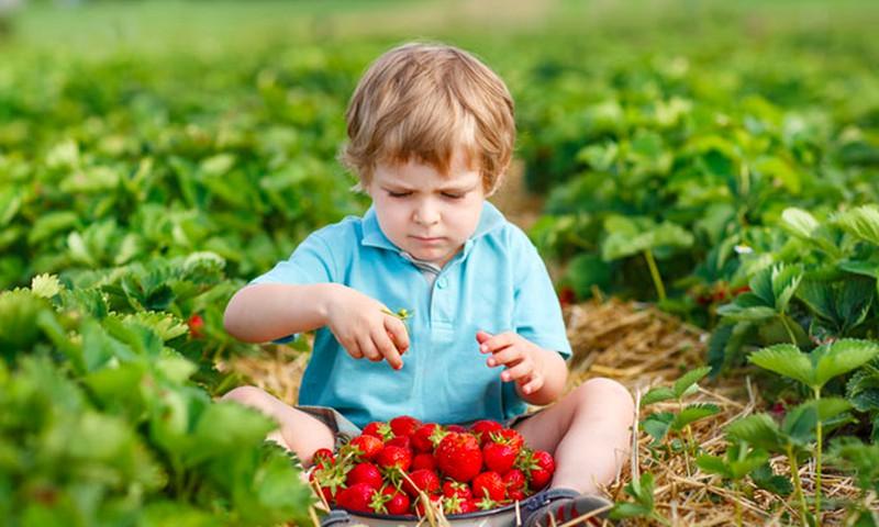 Naujas uogas ir vaisius vaikui siūlykime pamažu