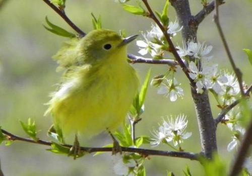 Kieme - jau pavasaris
