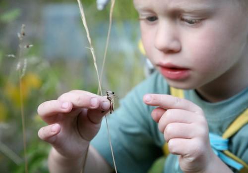 Ar sunerimti, jei vaikas išsigąsta vabaliukų?