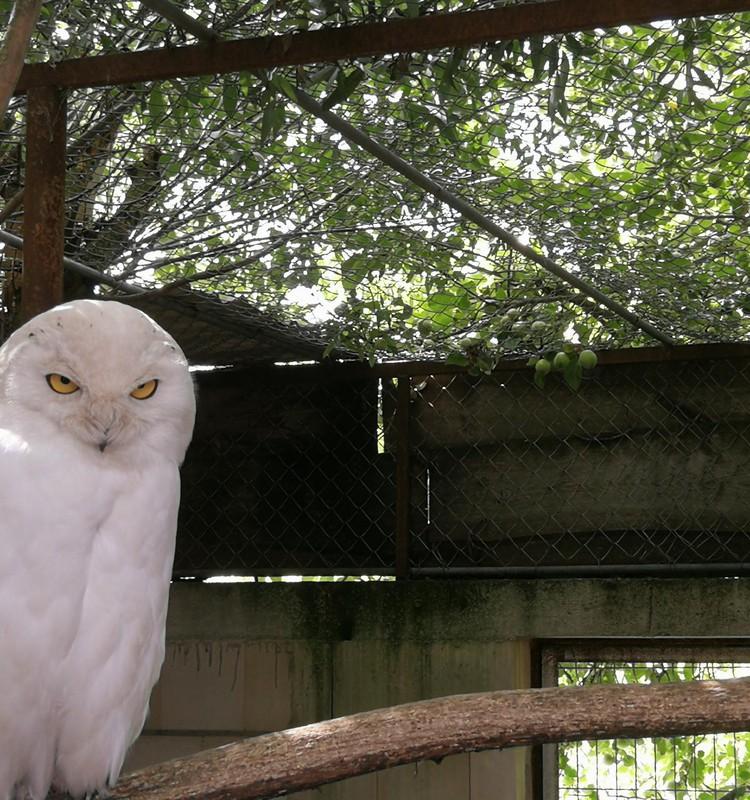 Klaipėdos zoologijos sodas