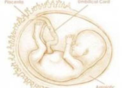 15 nėštumo savaitė: laikas drėkinti odą, norint išvengti strijų!