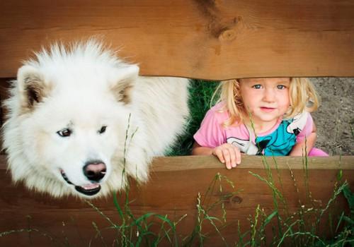 Šeimininkas panašus į savo šunį: tiesa ar mitas?