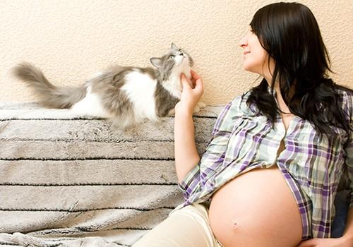 Ar verta įsigyti katiną nėštumo metu: mamos patirtis