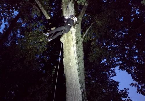 Šikšnosparnių naktis lyjant - fantastika!
