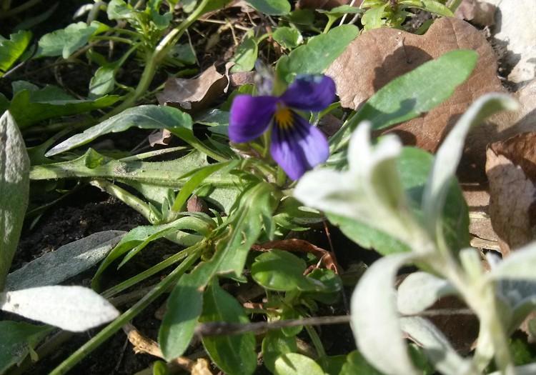 Pavasario blogas: pagaliau pavasaris! :)